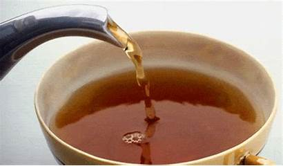 Tea Lover Try Different Must Every Types