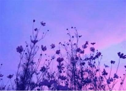 Pfp Aesthetic Purple Poppy Picsart
