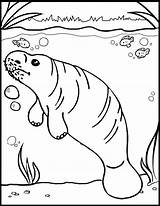 Manatee Coloring Marine Pages sketch template