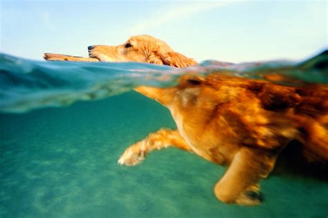 dogs    swim dog behavior animal planet