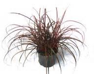 Carex Hachijoensis Evergold Pflege : grabbepflanzung fr hling pflanzenset kreis ~ Lizthompson.info Haus und Dekorationen