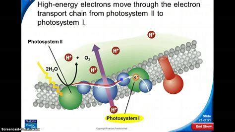 photosynthesis light dependent reaction youtube