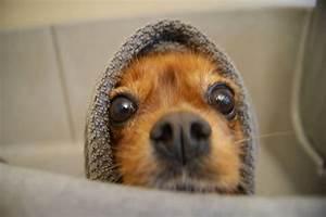 Sterben Milben Beim Waschen : hund waschen hundefriseur feingemacht ~ Markanthonyermac.com Haus und Dekorationen