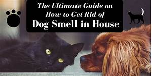 ultimate guide on how to get rid of dog smell in house With how to get rid of odors in house