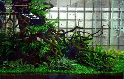 Aquascape Ada - mario fish tank gaming