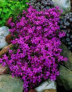 Arbre Ombre Croissance Rapide : plantes couvre sol croissance rapide dans le jardin moderne ~ Premium-room.com Idées de Décoration
