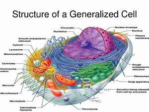 Vacuole Model
