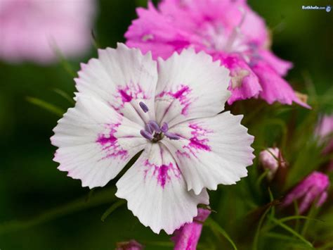 japanese names flower related keywords suggestions for japanese country flower