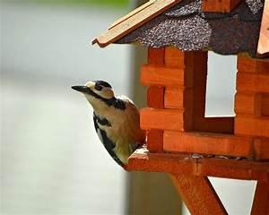 Welches Holz Zum Drechseln : vogelhaus selber bauen welches holz f r das vogelhaus ~ Orissabook.com Haus und Dekorationen