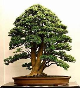 Bonsai Baum Garten : bonsai bonsai bonkai saikei pinterest kleine b ume ~ Lizthompson.info Haus und Dekorationen