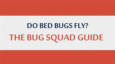 Do Bed Bugs Hop by Do Bed Bugs Fly The Bug Squad Guide