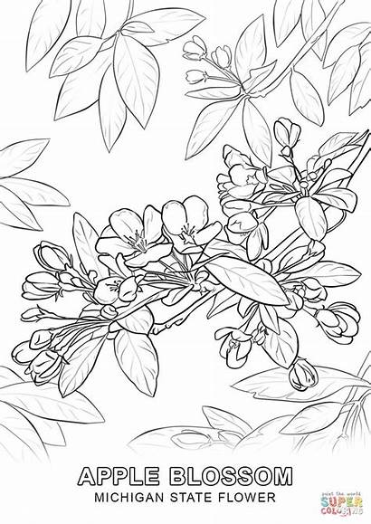 Coloring Blossom Pages Cherry Michigan Tree Arkansas