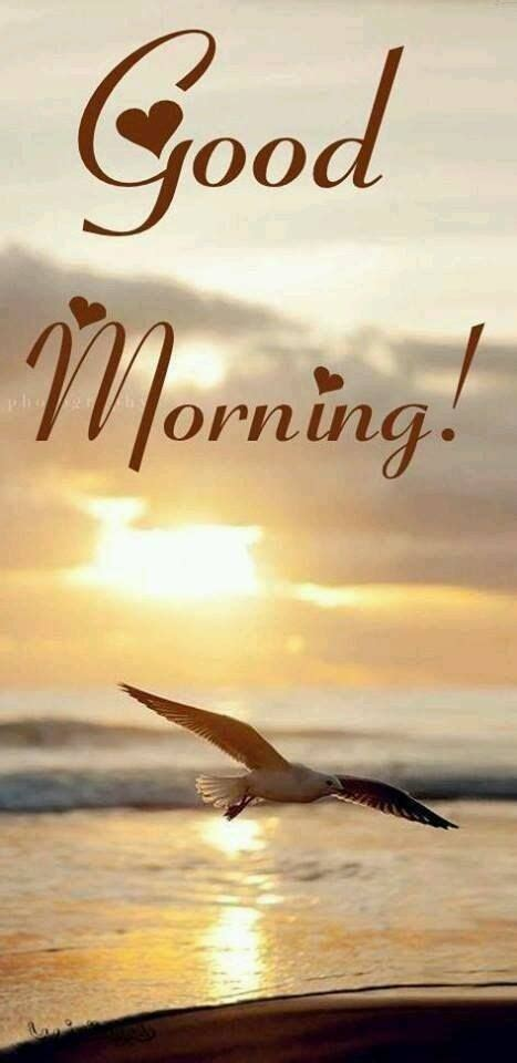 beautiful good morning greeting pictures