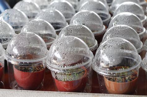 Grandma Garden (สวนคุณยาย น้องข้าวปั้น): แก้วพลาสติกVSถุงพลาสติก ในการเพาะเมล็ดแคคตัส