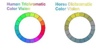 what colors do horses see what colors do horses see amaranthine