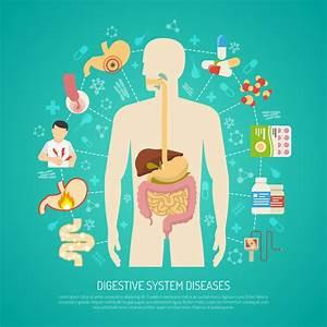 Human Digestion Diagram