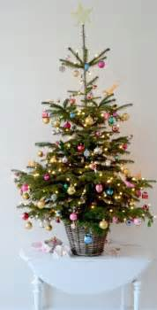 best 25 small trees ideas on tree stands tree and
