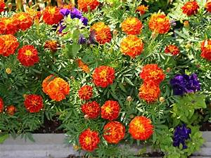 Container Garden Guide Flower Colour Schemes