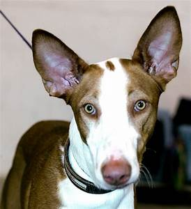 green eyed dog | Flickr - Photo Sharing!