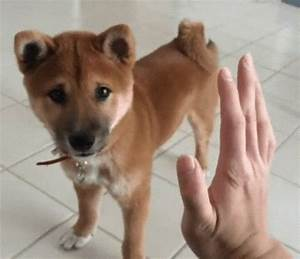 High Five Dog GIF Find & Share on GIPHY