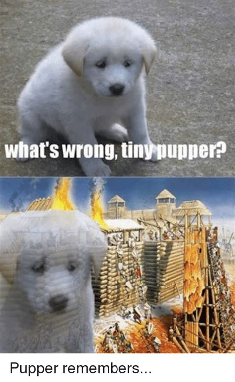 Pupper Memes - what s wrong tinynupperp pupper remembers badass baltic meme on sizzle