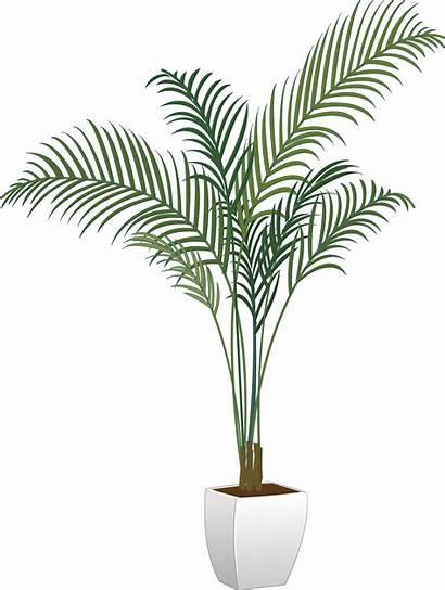 Plant Transparent Plants Potted Pot Flower Clipart