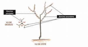 Comment Tailler Un Pommier : la taille d 39 habillage et de formation des arbres fruitiers ~ Dode.kayakingforconservation.com Idées de Décoration