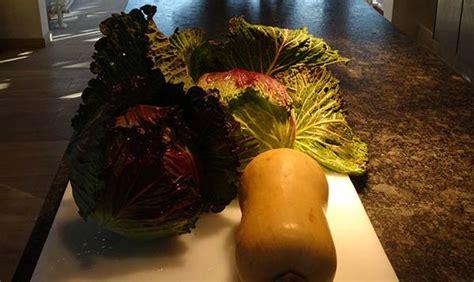 plant de cuisine plant de cuisine salade de palmiste with plant de cuisine