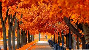 Wallpaper Fall nice hd wallpapers with red and orange ...
