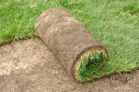 SOD – Alpine Landscaping And Irrigation