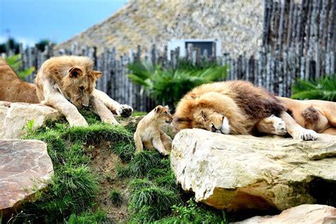 Il y en a 51 disponibles sur indeed.com, le plus grand site d'emploi mondial. Zoo de Beauval - Arts et Voyages