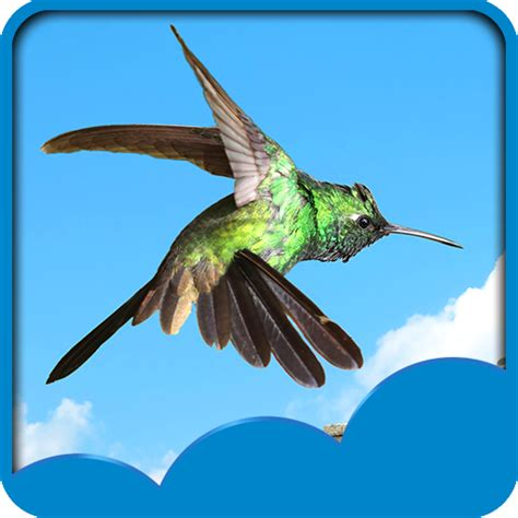 hummingbird live wallpapers