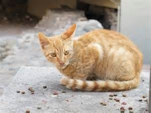 how to take care of a stray cat dinzie