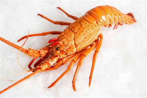 West australian lobster tails,revered for their size and wonderfully rich sweet flavor. Australian Lobster | Lobster Delivery Sydney | Manettas ...
