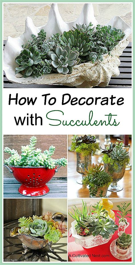 decorating with succulents succulent container ideas for your home