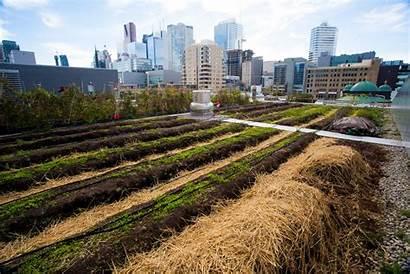 Urban Farm Ryerson Homegrown Formerly Project Week