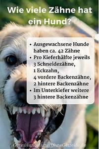 Wie Viele Löcher Hat Eine Frau : welcher hund hat das st rkste gebiss mit wie vielen ~ Lizthompson.info Haus und Dekorationen