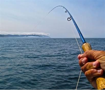 Fishing Fly Ocean Offshore Saltwater Oregon Caddis