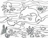 Coloring Habitat Animal Animals Ocean Getdrawings sketch template