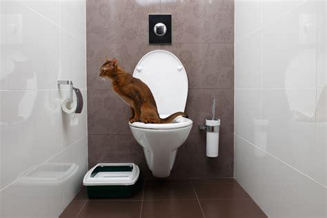 litiere dans les toilettes apprendre 224 chat 224 faire ses besoins dans les toilettes education du chat education chats