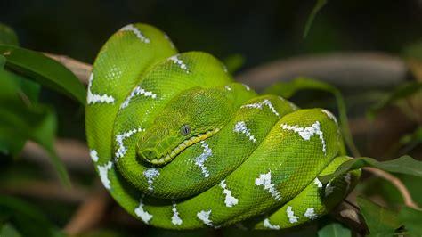 San Diego Zoo Animals & Plants