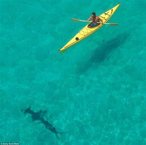 shark sharks kayak giant circling ocean jellyfish monster florida keys hammerhead terrifying lurking sea fins places waves around attack species