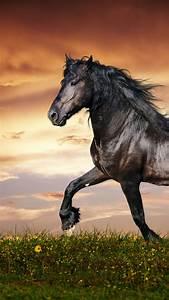 wallpaper, horse, , 5k, , 4k, wallpaper, , hooves, , mane, , galloping