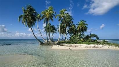 Palm Tree Desktop Trees Tropical 1080p Beaches