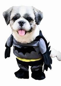dog costume philippines