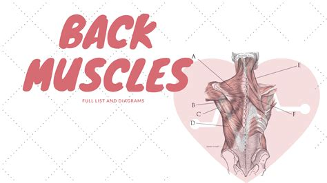 See the official 2016 list here: Back Muscles: Names And Diagram | Science Trends