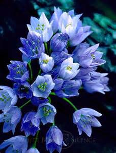 Beautiful Blue Flowers
