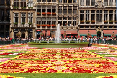 file bruxelles tapis fleurs 2010 3 jpg
