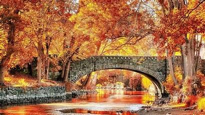 Fall Autumn Bridge Trees 3d Backgrounds Wallpapers