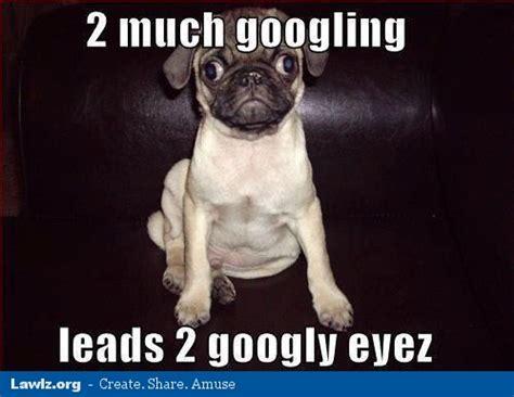 Puppy Dog Eyes Meme - 3